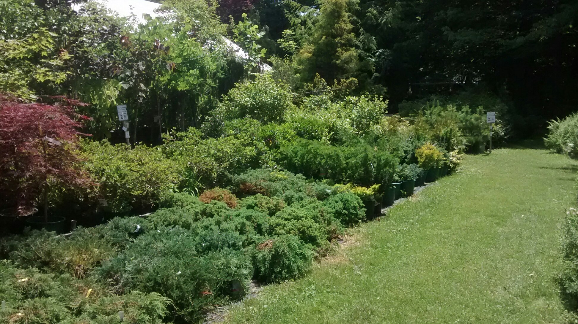 well trimmed gardening the vs garden natural formal jpg perhaps with shrubs look more american