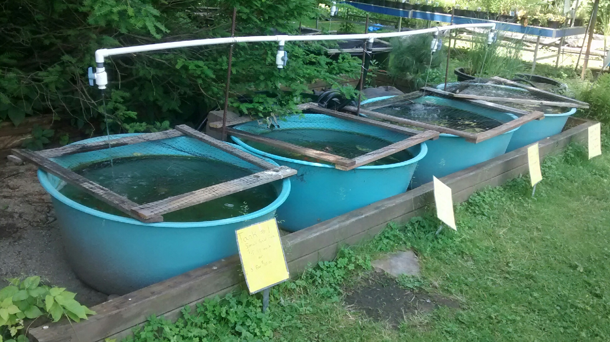Garden liner home design ideas and pictures for Hardiest pond fish
